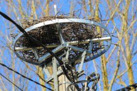 Nouveau nid pour les cigognes