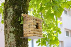 Pose de nichoirs fabriqués par les enfants de l'ASAL